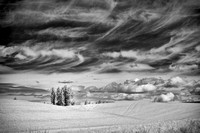 Palouse Field Infrared