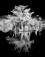 Cypress on Dead Lakes 1