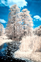 Lowcountry Swamp 2 - Infrared